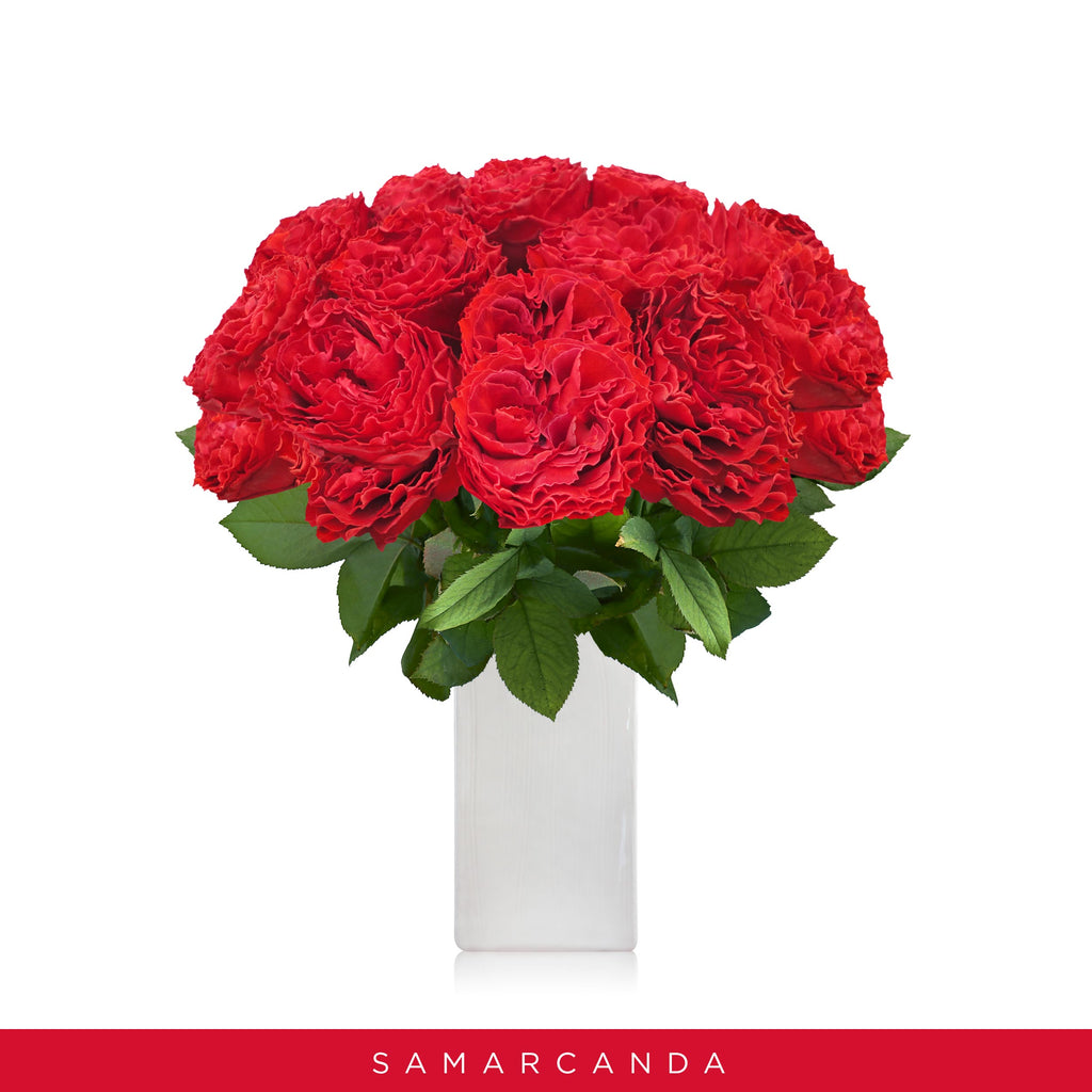 Garden Roses Red - Samarcanda - Wholesale Roses - Scented Roses - Fragrant vintage Roses Elnglish Roses - EbloomsDirect
