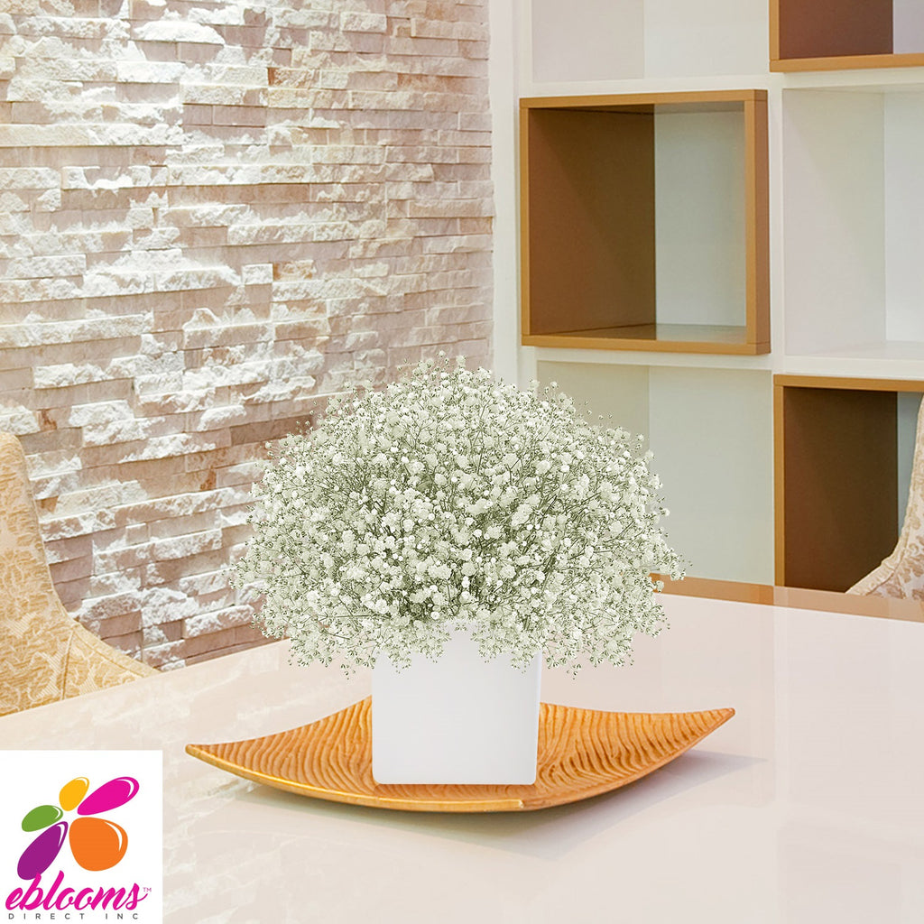 Gypsophila Baby's Breath Natural White- EbloomsDirect