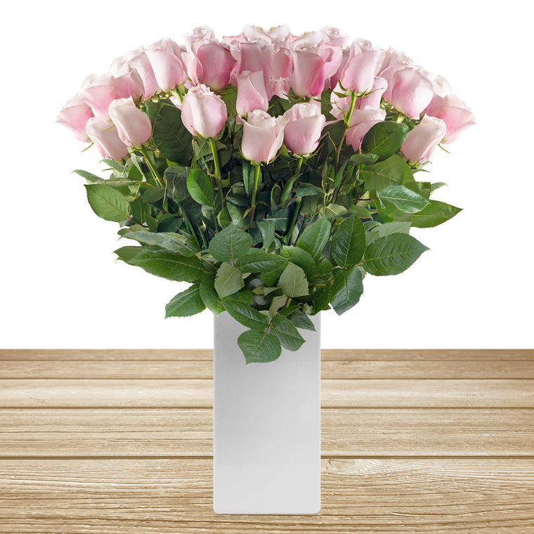 Roses Light Pink 60cm Long Stem Pack 100 stems - EbloomsDirect