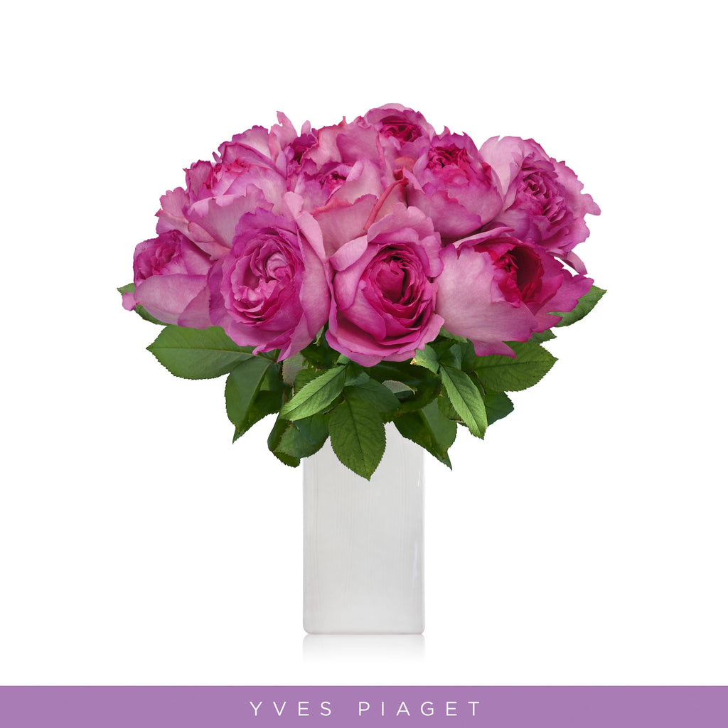 Garden Roses - Yves Piaget - Wholesale Roses - Scented Roses - English Roses Eblooms Direct