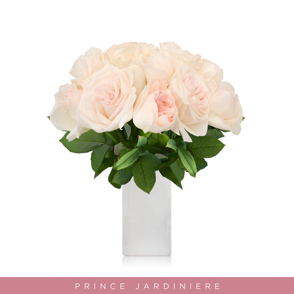 Garden Roses - Prince Jardiniere - Blush Pink flower wholesale roses - English roses - Premium scented roses EbloomsDirect