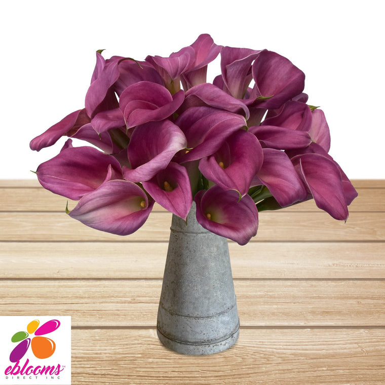 Mini Callas Purple Pink Pack 80 Stems- EbloomsDirect