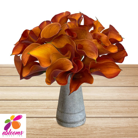Mini Callas Orange Pack 80 stems - EbloomsDirect