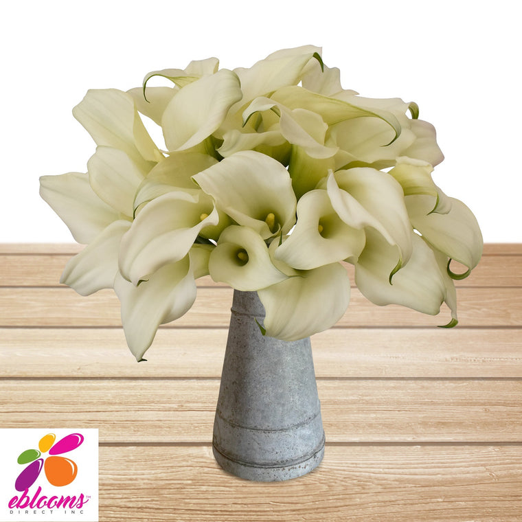 Mini Callas White Pack 80 Stems- EbloomsDirect