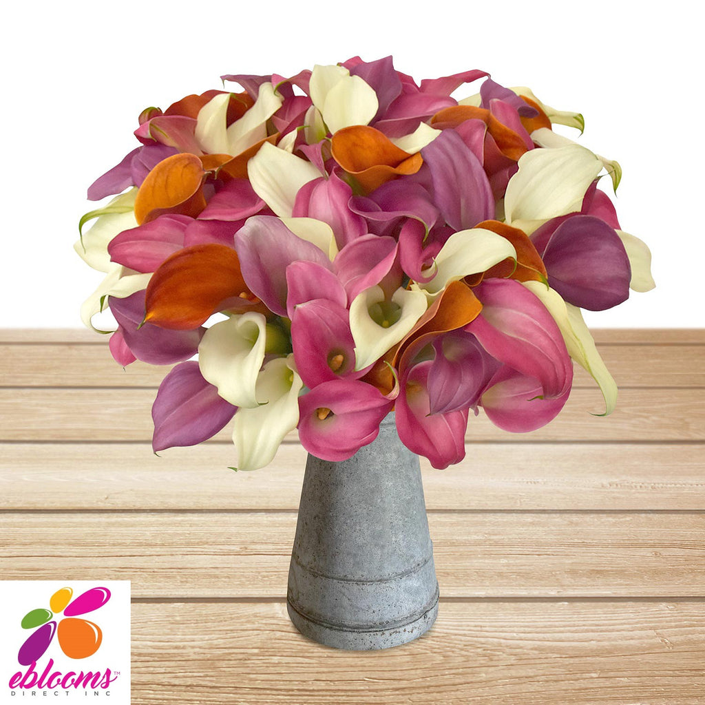 Mini Callas Assorted Pack 80 stems - EbloomsDirect