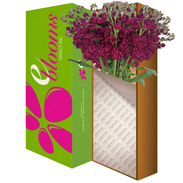 Stock Royal Purple Flowers Pack 80 Stems -EbloomsDirect