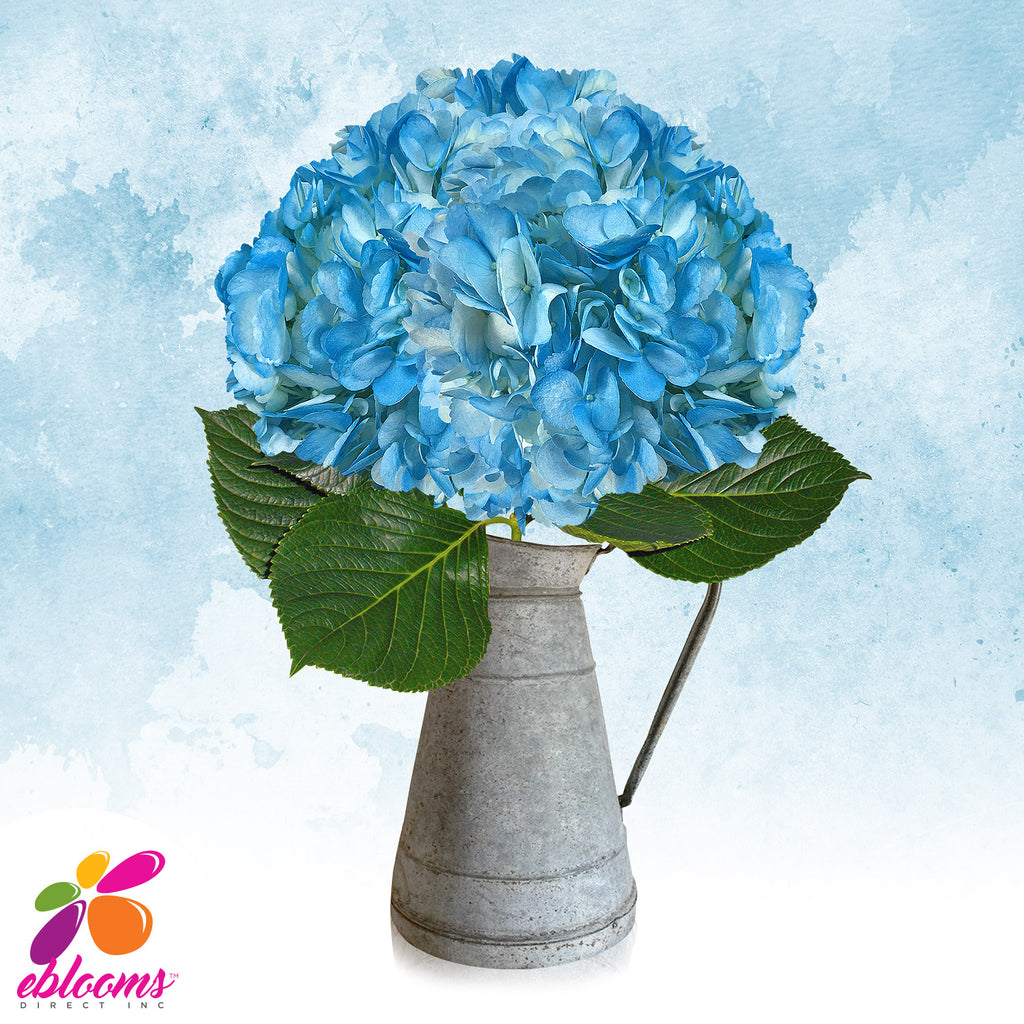Hydrangea Light Blue Airbrushed
