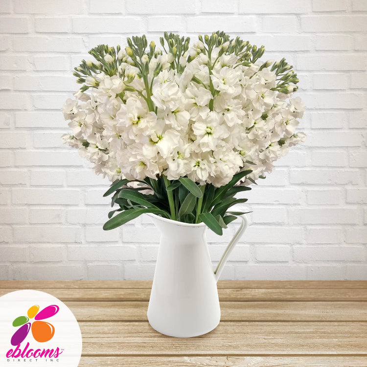 Stock White Flowers Pack 80 Stems -EbloomsDirect