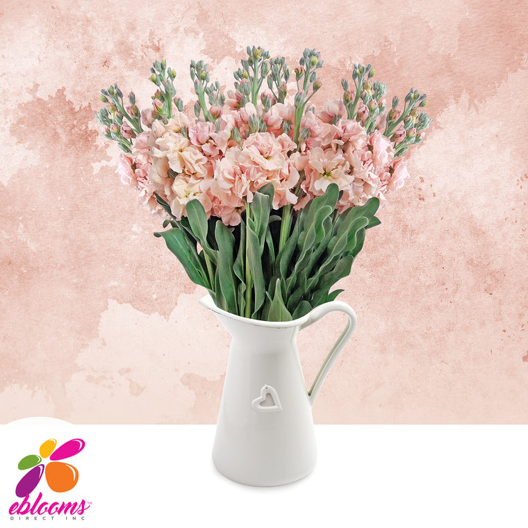Stock Peach Flowers Pack 80 Stems -EbloomsDirect