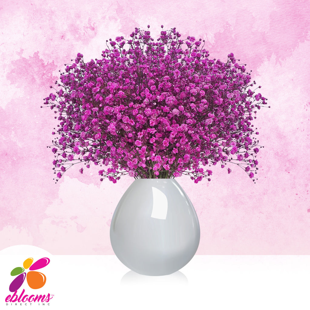 Gypsophila Baby's Breath Tinted Pack 10 - More Colors available - EbloomsDirect