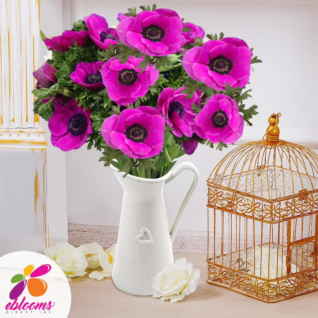 Anemone Hot Pink - EbloomsDirect