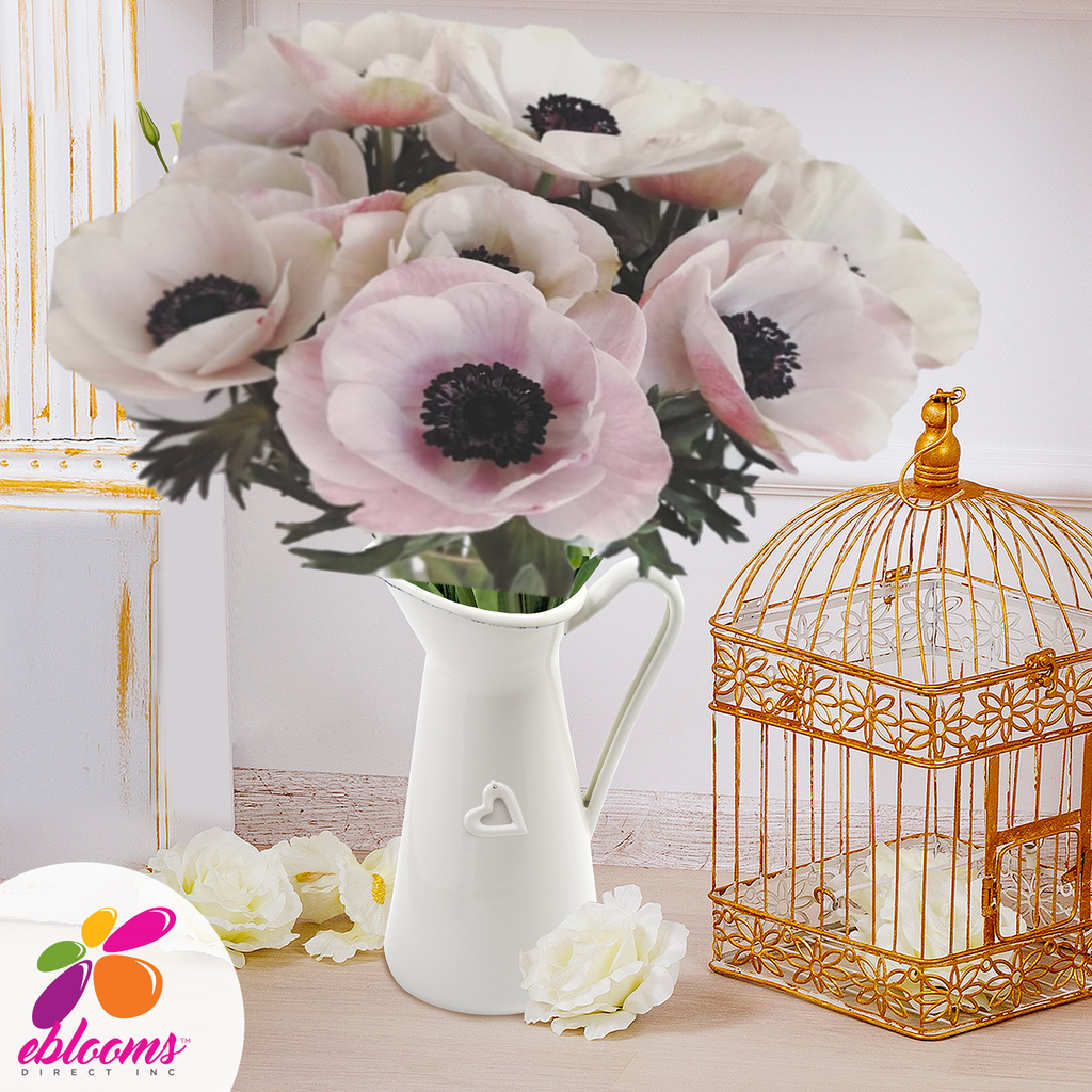 Anemones Blush - EbloomsDirect