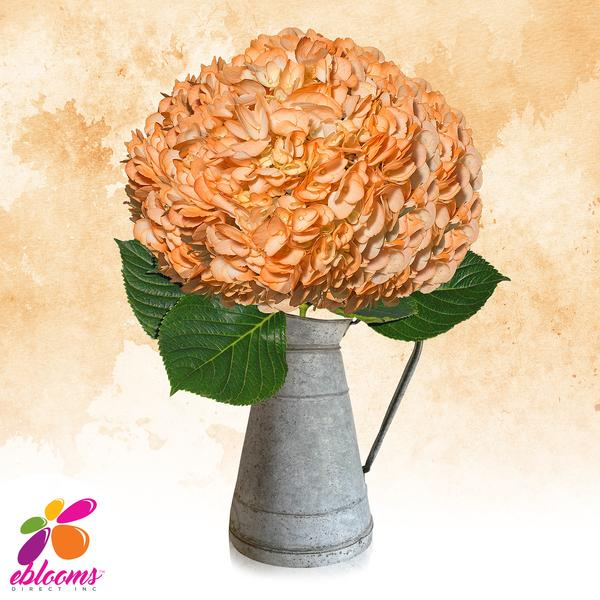 Hydrangea Orange Airbrushed Just for Halloween - EbloomsDirect