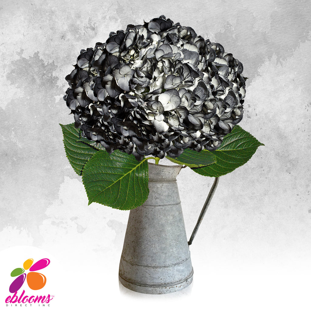 Hydrangea Black Airbrushed Just for Halloween - EbloomsDirect