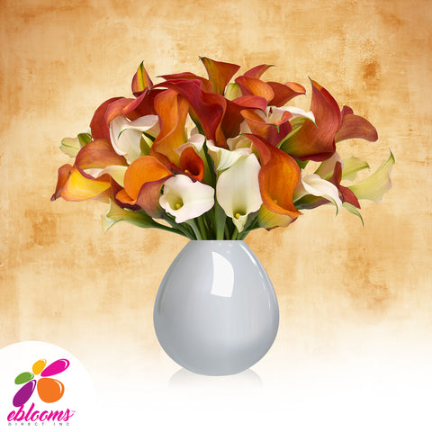 Mini Callas White and Orange Pack 80 stems