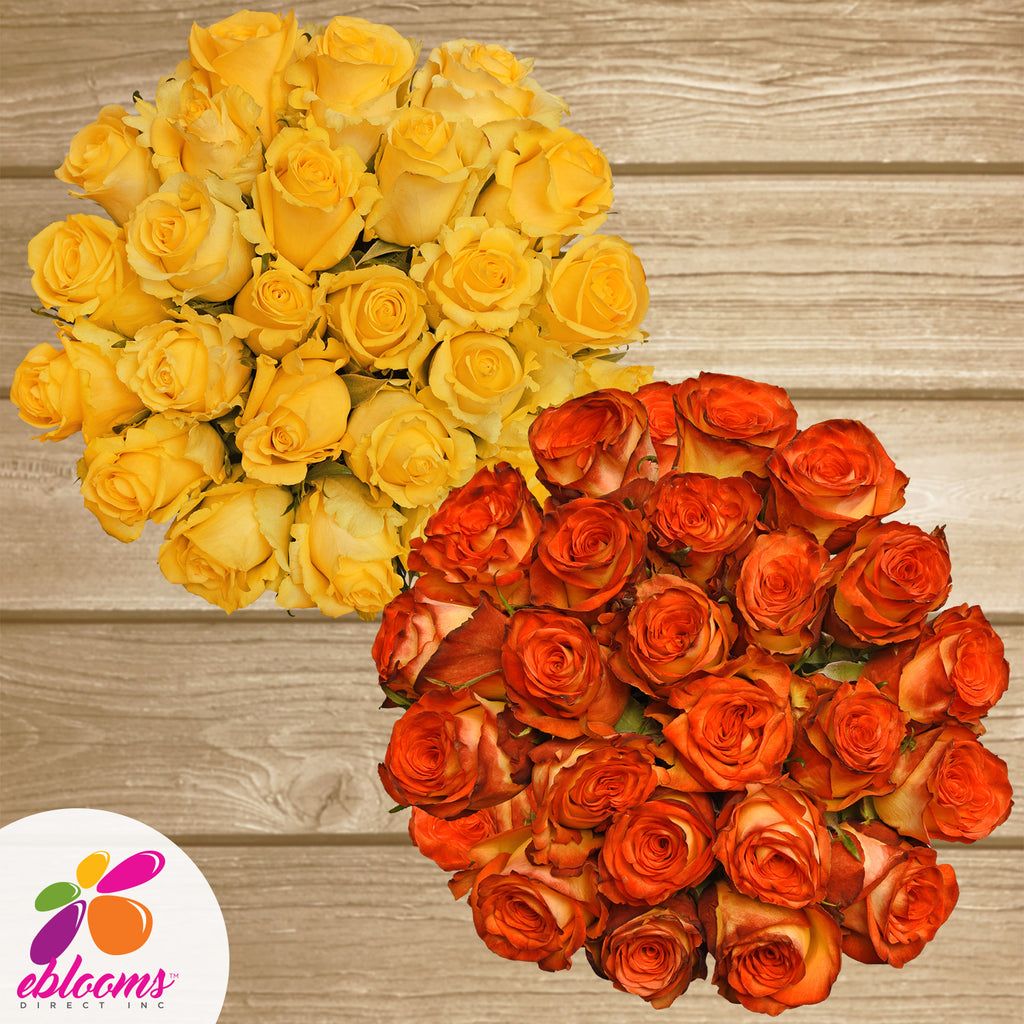 Roses Yellow and bicolor yellow red th best place to order flowers online for any ocassion and valentine's day