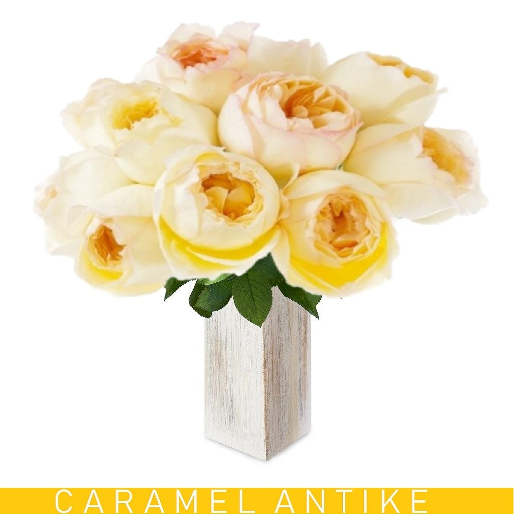 Garden Rose Caramel Antike Honey Yellow - EbloomsDirect