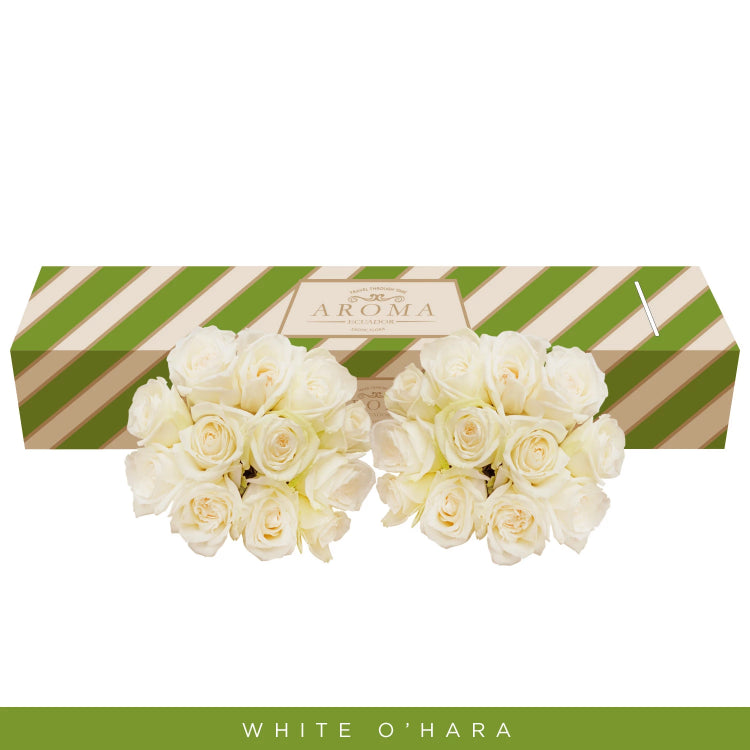 White O'hara Garden Roses - Premium scented Roses - English roses - roses wholesale- EbloomsDirect