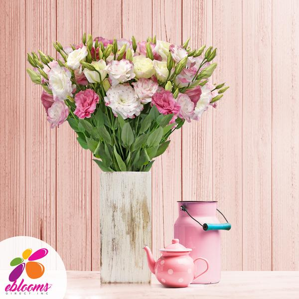 Lisianthus Extra Bicolor Pink 80 stem pack 70cm - EbloomsDirect