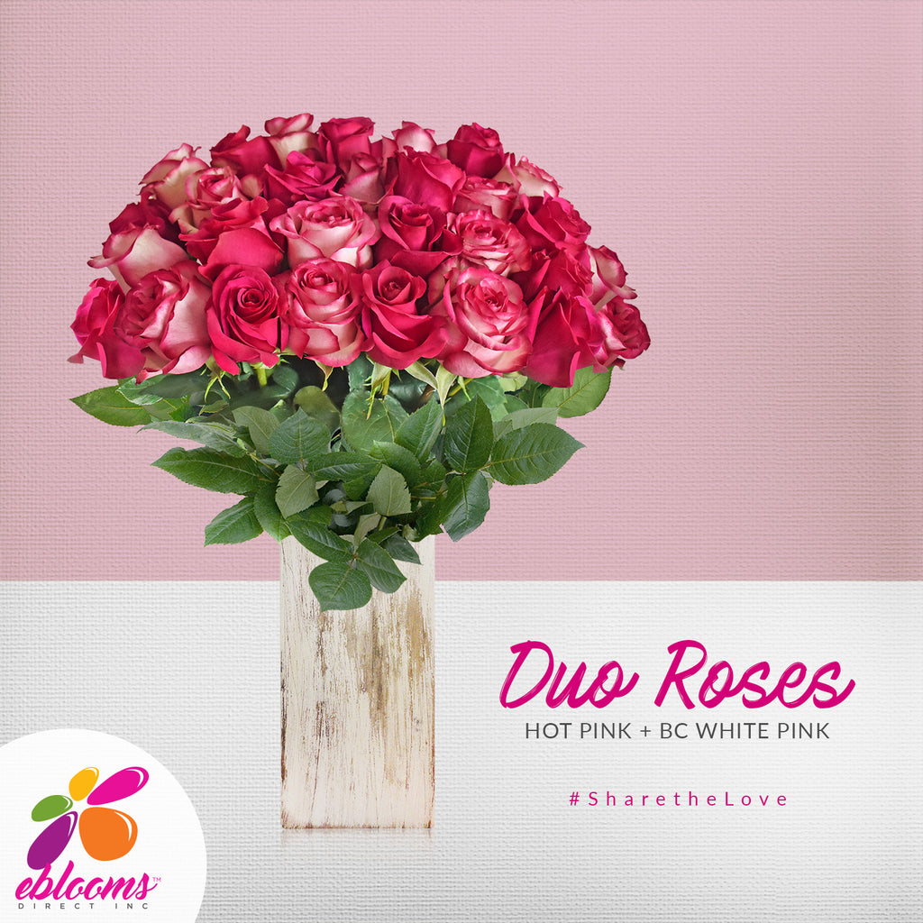 Duo hot pink and Bicolor roses the best flowers arrangements bouquets and centerpieces to order online for any ocassion or wedding  and Valentine's day