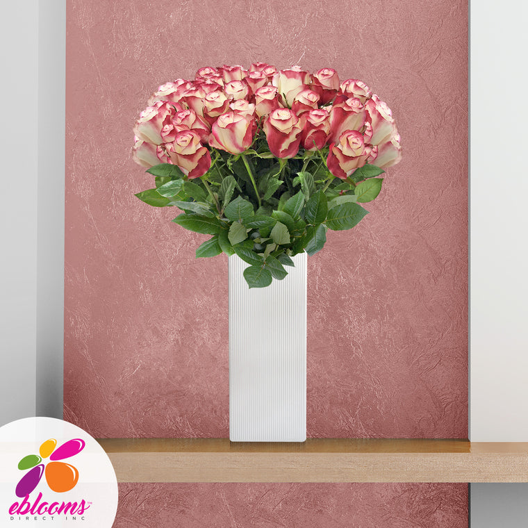 Fireworks Premium 36 Roses Bicolor White-Red 80cm Gift with Vase - EbloomsDirect