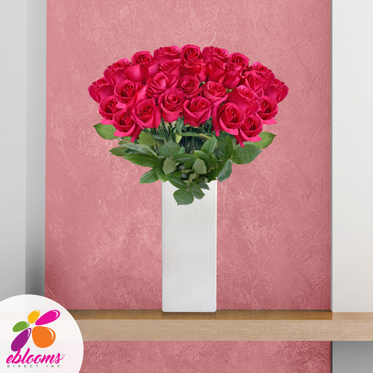 Fireworks Premium 36 Roses Hot Pink 80cm Gift with Vase - EbloomsDirect