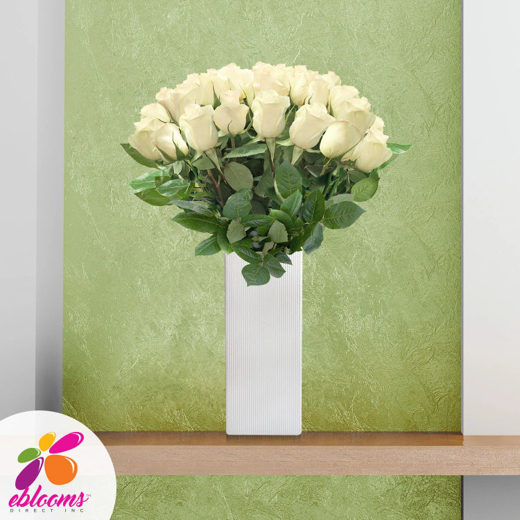 Fireworks 36 Premium white Roses 80cm Gift with Vase - EbloomsDirect