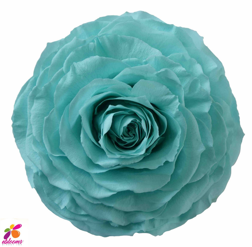Preserved Flower Aqua tiffany blue rose - wholesale rose