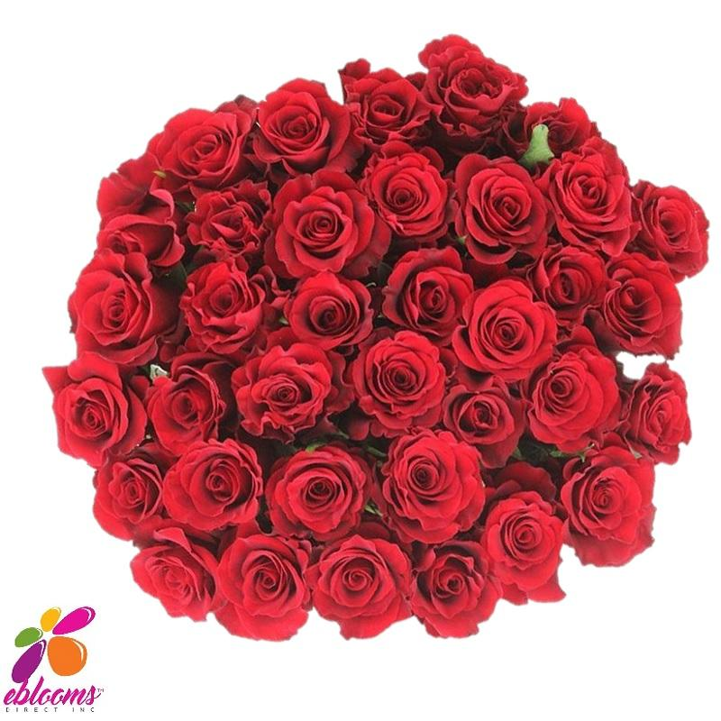 Altamira Red Rose Variety - EbloomsDirect