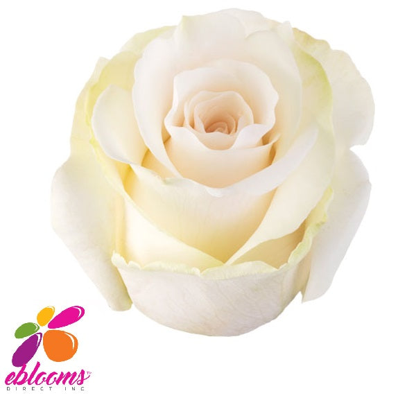 Amelia Rose Variety - EbloomsDirect