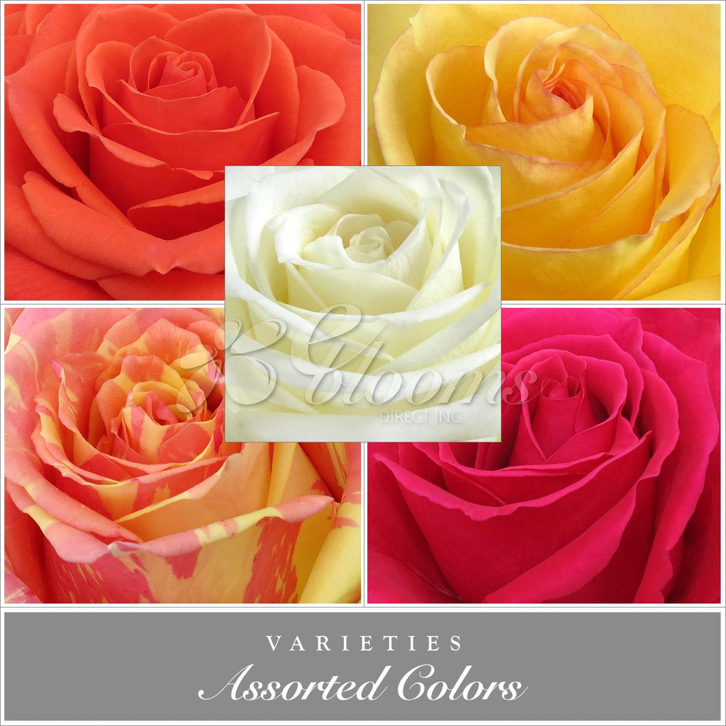 Assorted Color Roses, 50 cm Packed 125 stems