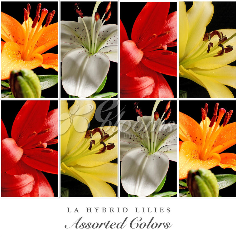 L.A. Hybrid Lilies Assorted Color - EbloomsDirect