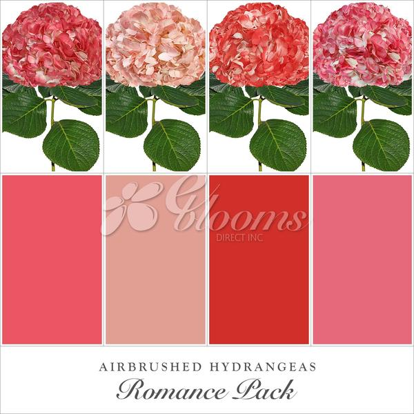 Hydrangea Romance Pack Red - Peach, Light Pink and Coral