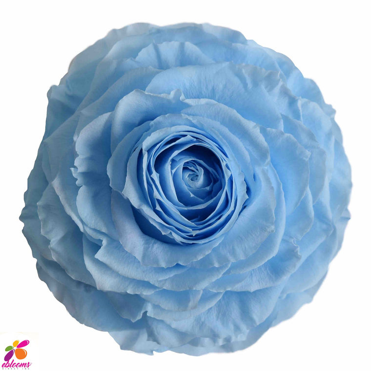 Preserved Roses Baby Blue - EbloomsDirect