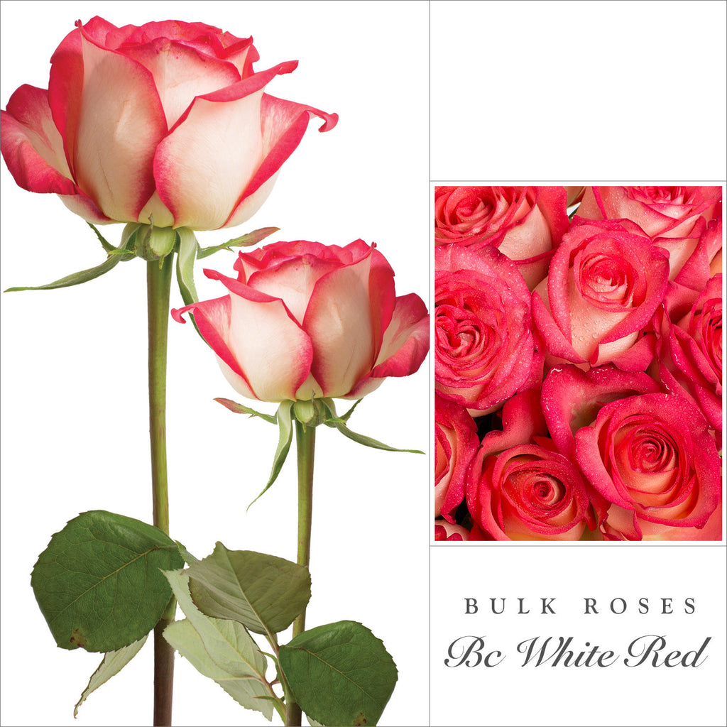 Bicolor Whitered Roses Ebloomsdirect Weddings Events 2018