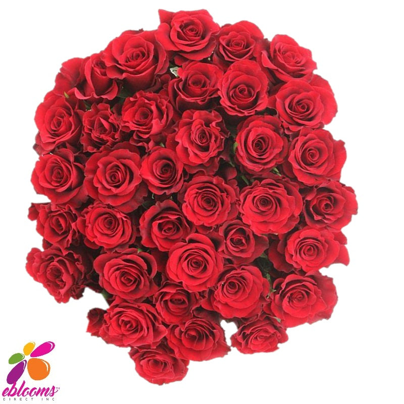 Believe Red Rose Variety - EbloomsDirect
