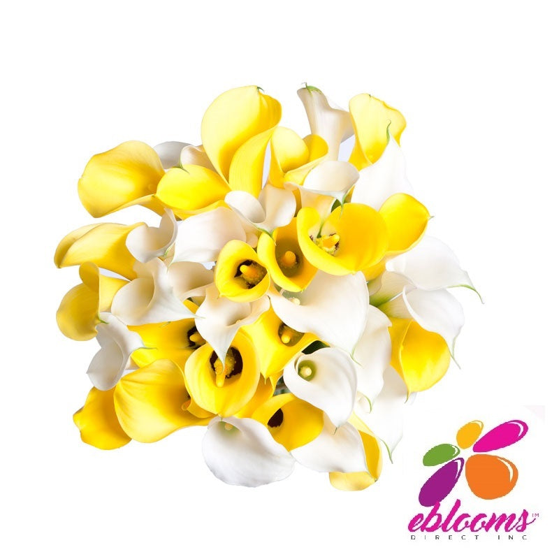 Mini Callas Yellow & White Bridesmaid -Pack 6 - EbloomsDirect