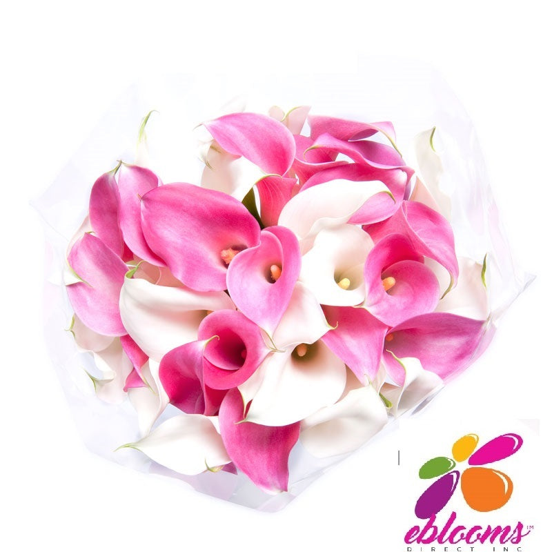 Mini Callas White & Pink Bridesmaid -Pack 6 - EbloomsDirect