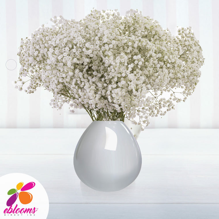 Baby's Breath Cloud Natural White