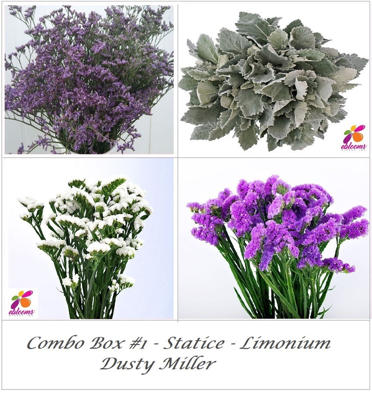 Bulk Flower Combo Box 1- Statice - Limonium - Dusty Miller -  EbloomsDirect