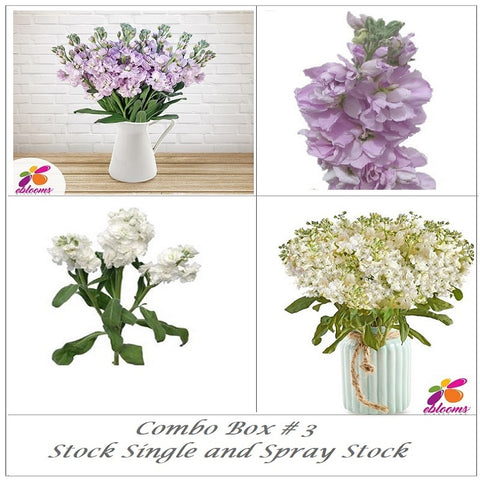Bulk Flower Combo Box#3 - Stock Single and Spray Stock Lavender - EbloomsDirect