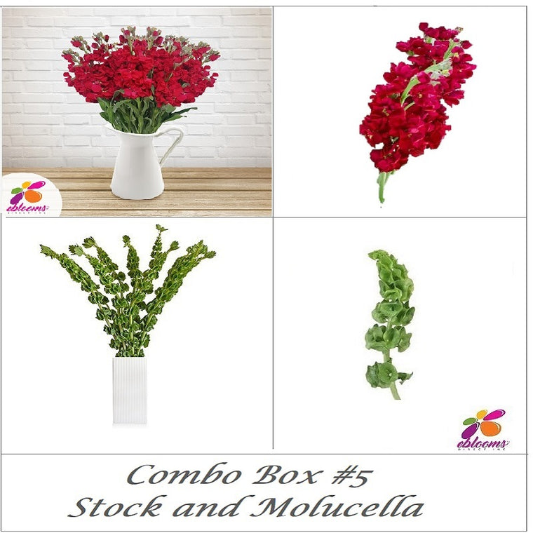 Bulk Flower Combo Box 5- Stock Single and Molucella - EbloomsDirect