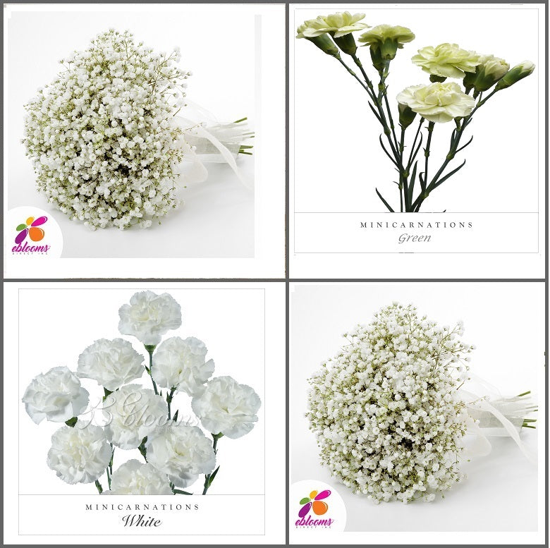 Combo Box #8 - Baby's Breath and Mini Carnation Green