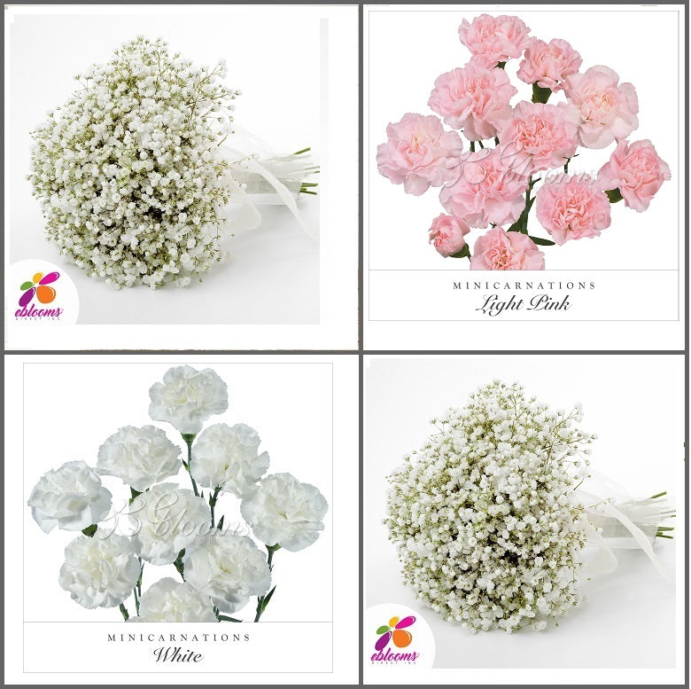 Combo Box #8 - Baby's Breath and Mini Carnation Pink
