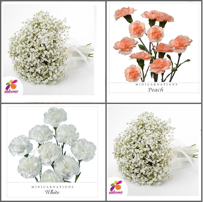 Combo Box #8 - Baby's Breath and Mini Carnation Peach