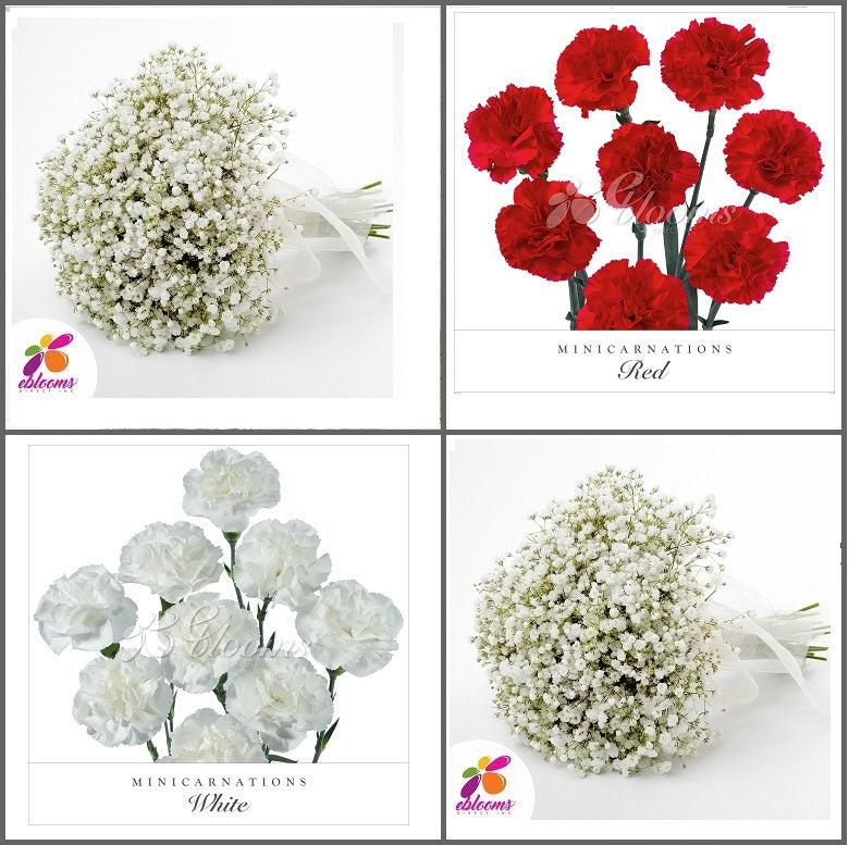 Combo Box #8 - Baby's Breath and Mini Carnation Red