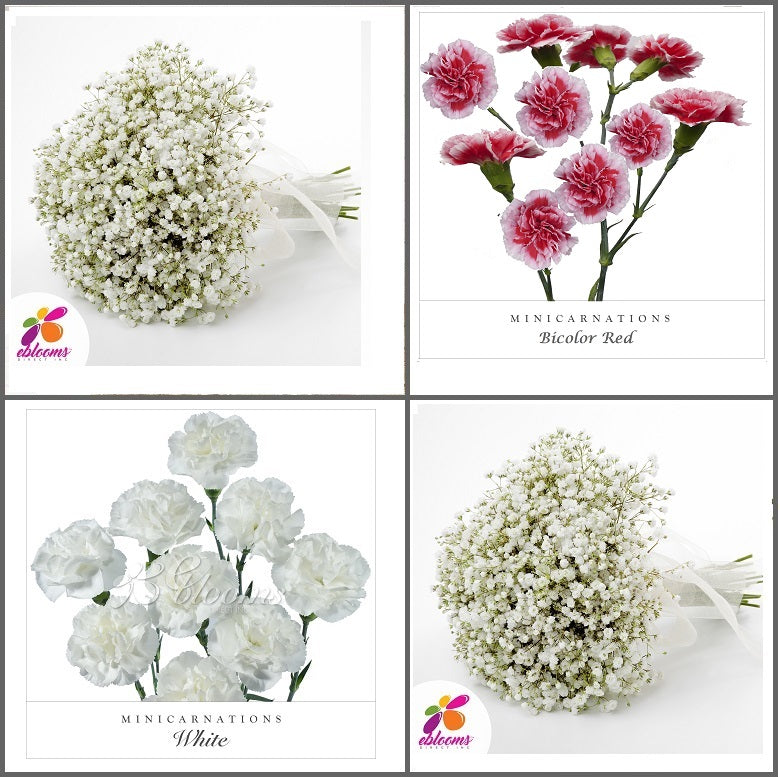Combo Box #8 - Baby's Breath and Mini Carnation Scarlette
