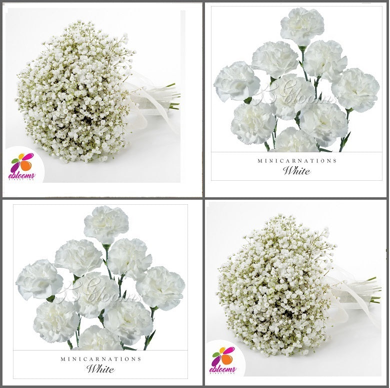 Combo Box #8 - Baby's Breath and Mini Carnation White