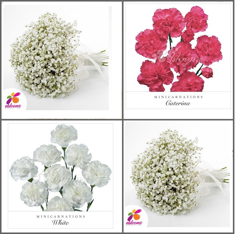 Combo box #8 - Baby's Breath and Mini Carnation