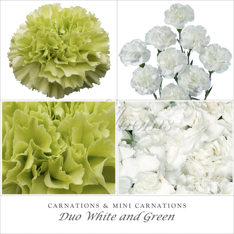 Carnations and Mini Carnation White and Green - EbloomsDirect